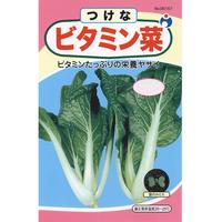 ビタミン菜 / 送料込 種セット 11g ギフト