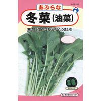 冬菜(油菜) / 送料込 14g ギフト
