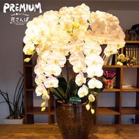 光触媒プレミアムコチョウランLL5F ホワイトイエロー / アートフラワー サイズ260 ギフト 抗菌消臭