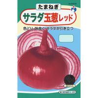 サラダ玉ねぎレッド / 送料込 8g ギフト
