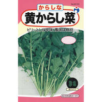 黄からし菜 / 送料込 12g ギフト