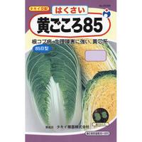 タキイ交配黄ごころ85白菜 / 送料込 3g ギフト
