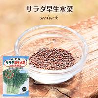 サラダ早生千筋京水菜 / 送料込 種セット 10g ギフト