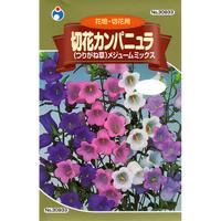 切花カンパニュラメジュームミックス / 送料込 種セット 4g ギフト