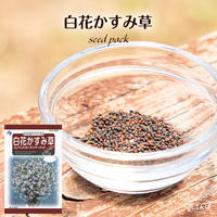 白花かすみ草コンペントガーデン / 送料込 種セット 6g ギフト