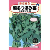 越冬つぼみ菜  / 送料込 10g ギフト
