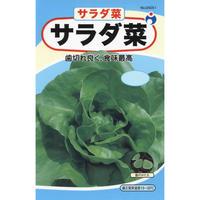 サラダ菜 / 送料込 4g ギフト