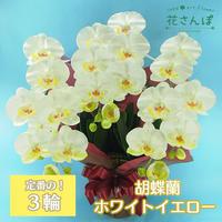 光触媒コチョウランM3F ホワイトイエロー / アートフラワー サイズ160 ギフト 抗菌消臭