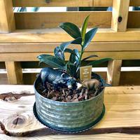 MINI Safari Plants -アメリカパイソン-