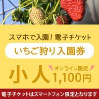 ☆数量限定☆いちご狩り入園券(3月17日~分) 小人(小学生) オンライン購入特典付き