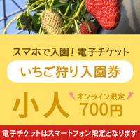 ☆数量限定☆いちご狩り入園券(5月7日~分) 小人(小学生) オンライン購入特典付き