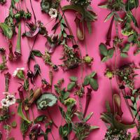 ハラペコラボの包装紙 -moe moe harapecolab peper 2018 summer pink-
