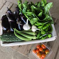 自然栽培・旬の野菜セット (6~7品目)【お試し商品】
