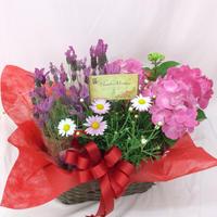 母の日用 花寄せ鉢