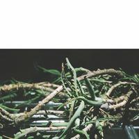 『コルバトントリ、』演出:飴屋法水/原作:山下澄人(DVD)