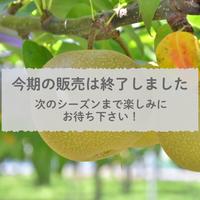 【愛知県安城市/刈谷市産】安城梨『あきづき』 3㎏化粧箱・5~6玉入り