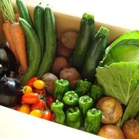 火曜日発送 クール便 旬の無農薬無化学肥料の普通サイズの野菜セット