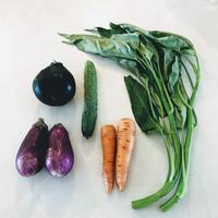 たねを環る野菜セット