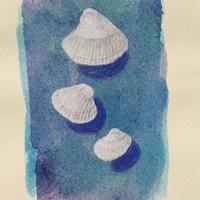 「3つの貝殻」画用紙にテンペラ画