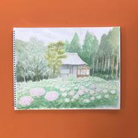透明水彩画「久留米 千光寺の紫陽花」フレーム付き