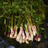 天然山菜(800g) Edible Wild Plants