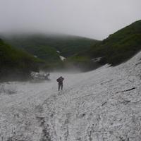 天然月山筍(500g)