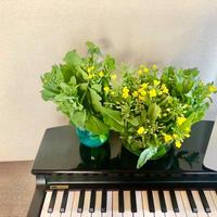 採れたて音楽「今月のお野菜セット」¥6,500