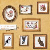 保護猫アンドゥ テーマソング「ようこそ私たちのもとへ」CD