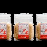 ご家庭の炊飯器で簡単に炊ける「無洗米 卑弥呼の玄米」 1kg×3