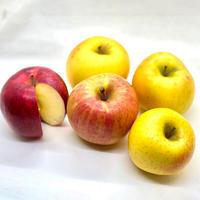 りんご5種食べ比べセット!サンフジ、ジョナゴールド、飛馬ホワイト、森のかがやき、こうこうりんご。