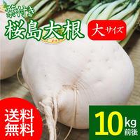 【送料無料】桜島大根 大サイズ 葉付き 10キロ前後 専用箱入り ゆうパック120〜140サイズ