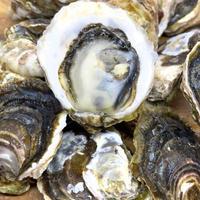 赤穂クリスタル 岩牡蠣(兵庫)