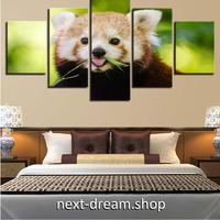 【お洒落な壁掛けアートパネル】 枠付き5点セット レッサーパンダ 動物写真 ファブリックパネル インテリア m04620