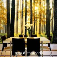 3D 壁紙 1ピース 1㎡ 自然風景 森林 夕日 インテリア 装飾 寝室 リビング 耐水 防カビ h02439