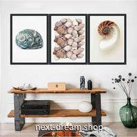 お洒落な壁掛けアートパネル 枠付き3点セット / 各15×20cm カタツムリ 貝殻 ポスター 絵画 ファブリックパネル m03418