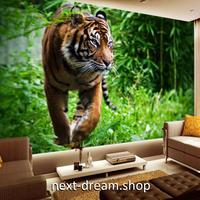 3D 壁紙 1ピース 1㎡ 動物フォト 山中の虎 タイガー  インテリア 装飾 寝室 リビング 耐水 防湿 h02539