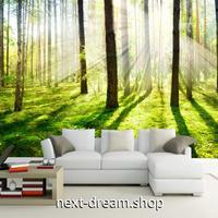 3D 壁紙 1ピース 1㎡ 自然風景 森林 サンシャイン インテリア 装飾 寝室 リビング 耐水 防カビ h02426