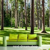 3D 壁紙 1ピース 1㎡ 自然風景 森林 癒しの景色 インテリア 装飾 寝室 リビング h02216