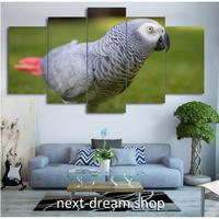 【お洒落な壁掛けアートパネル】 枠付き5点セット オウム 写真 鳥 自然 ファブリックパネル インテリア m04647