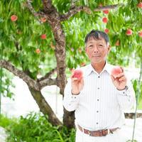 期間限定!フルーツプレミアム定期便2019【送料無料】