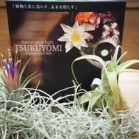 ◆ TSUKUYOMI LED / 太陽光に近似の植物育成ライト (超高演色:Ra97)