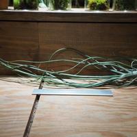 チランジア / ブッツィー × セレリアナ (T.butzii × T.seleriana) *A01/Aug01