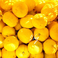 【ワケあり】天空の黄柚子 5kg