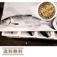 【先行予約!】カネシメ食品  通販「5本限定!最高級!貴重な時鮭(トキシラズ)脂ノリ抜群の3キロ以上の大型のみ!」《送料無料》(※沖縄、離島除く)