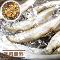 【旬!希少】カネシメ食品 通販「若ししゃも 600g」《送料無料》(※沖縄、離島除く)