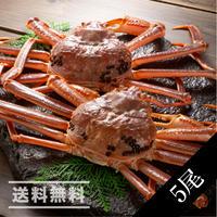 活本ズワイ蟹 5尾(かに太郎)※送料無料(※沖縄、離島除く)