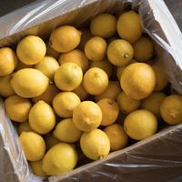 小豆島産レモン 加工用 8kg