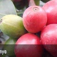 (メール便対応400gまで)ケニアAB キリニャガ KIANJIRUキアンジル 100g 深煎り