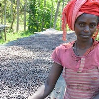(メール便対応400gまで)エチオピア モカ イルガチェフェ ウォレカ ナチュラル精製 100g 浅煎り