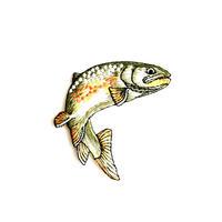アイロンワッペン【ニジマス 川魚 fish】アメリカ 刺繍